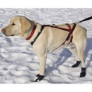 Paws adjustable harness